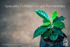 becausecoffeeis ... ...everyone'sfavoritefruit / imageby@bryonlippincott / Text / Photo by@BryonLippincott / SpecialtyCoffees•OriginPartnerships