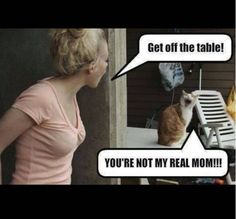 Hilarious Cat Memes That Will Have You Cracking Up