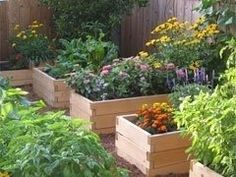 Horticulture Therapy for Chicago Dementia Patients