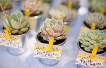 Wedding Decor - Succulente