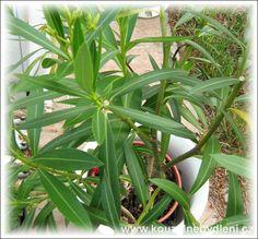 Gardens, Plants, Cactus, Outdoor Gardens, Plant, Garden, House Gardens, Planets
