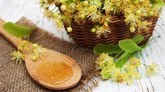 Pripravte si zápar z lipových kvetov aj v zime.
