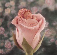 Anne Geddes - Baby in Rose
