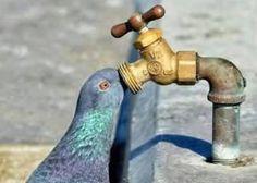 【ぽっぽっぽ】鳩のおもしろ画像まとめ【はとぽっぽ】 - NAVER まとめ