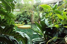 Victoria Amazonica Kas, Rotterdam Zoo, 11-07-2014, foto Angela Kuckartz