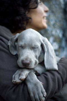 I'm thinking its about time to add another baby to our life! Miss this sweet baby weim face..