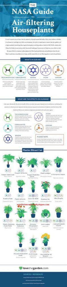 plantes-d-intérieur