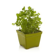 Styled like a classic footed cachepot, our version downsizes in springy green to house herbs and small potted plants.