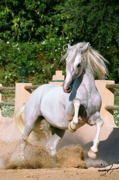 This is Madison she is a romantic mare the stallions adore her she is loved by everyone she is so sweet only around stallions and friends and is currently looking for a mate she can fight and she is really brave