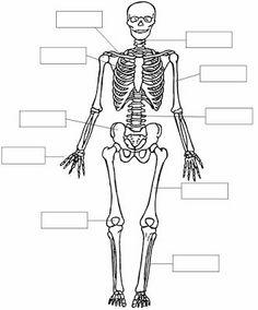 Dibujos del esqueleto y nombres de los huesos para colorear