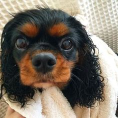 Bath time for Willow ♥