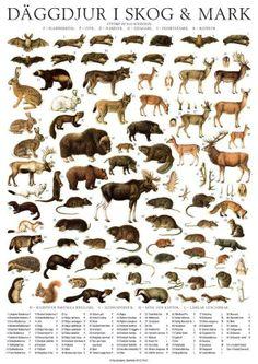 the wild animals of scandinavia (rdr)