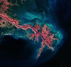 Mississippi River birdfoot Delta, where it empties into the Gulf of Mexico. Vegetation is colored pink and sediment is bright blue and green.