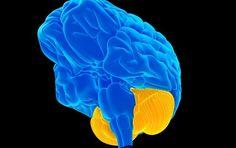 The Cerebellum Is Yo