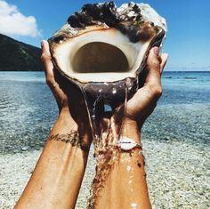 Some shells are too beautiful to even take from the beach 🐚 Summer Dream, Summer Of Love, Summer Beach, Summer Vibes, Summer Days, Hawaii Beach, Beach Trip, Tumblr Ocean, Photography Beach