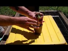 A new use for toilet paper rolls that will help your tomato seedlings get even bigger.