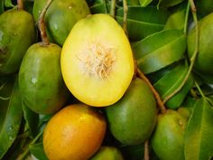The golden apple is an oval, medium-sized, green Caribbean fruit that grows on a tree. The flesh tastes like a mango crossed with a pineapple, making this a wonderful fruit to use in juices, smoothies, chutneys and preserves. It has a rather annoying spiky seed in the centre so be careful if eating it raw!