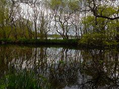 Tree Lined Lake Tree Line, My Photos, Country Roads, Plants, Image, Scouts, Plant, Planets