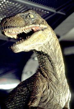 Raptor - Jurassic park  http://www.extramoeniart.it/mi-ritorna-in-mente/jurassic-art-immaginare-i-dinosauri