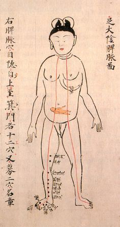 Pregnancy   Anatomical illustration that provide a unique perspective on the evolution of medical knowledge in Japan during the Edo period (1603-1868)