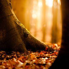 Forest glow / Image via: 96dpi #autumn #fall