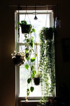 apartment garden? could be good for growing herbs + privacy screen