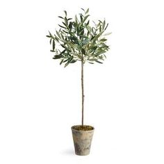 Bring a little of the Mediterranean to your décor with the Napa Home and Garden Olive Potted Silk Tree . This tree is botanically accurate. Indoor Olive Tree, Potted Olive Tree, Faux Olive Tree, Potted Trees, Indoor Trees, Plants Indoor, Topiary Plants, Topiaries, Ficus Tree