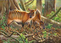 """""""Zebra Duikers""""SOLD -AFRICAN ORIGINALS"""