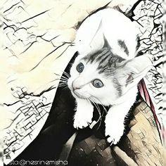 #cat #cats #kitty #kitten #chat #cat_lover