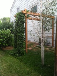 My homemade hops trellis. No - really, this isn't a recycled web pin. I built this on my south lawn - even doubles as AC unit shade for better efficiency.