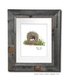 Bird Nest Print No.6 Beautiful Nest with by GnosisPictureArchive, $10.00