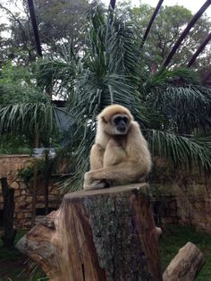 "See 217 photos from 1491 visitors about picnics and zoos. ""The zoo is the foreign diplomatic corps in the city lobbying to the plight of their. Stuff To Do, Things To Do, Africa Travel, Island Life, Beautiful Islands, Panda Bear, South Africa, Places To Go, Exotic"