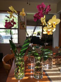 water grow orchids