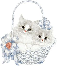 Alphabet of gray kittens in basket. I Love Cats, Cool Cats, Kittens Cutest, Cats And Kittens, White Kittens, Kitten Cartoon, Kitten Images, Grey Kitten, Photo Chat