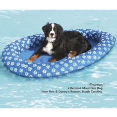Swim Float  Designed especially for dogs, this paw- and-nail friendly pool float features heavy-duty, reinforced construction that won't puncture, and an innovative design that springs open and practically folds itself for easy transport or storage.