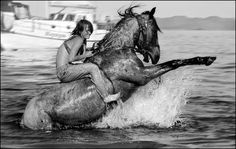 Online digital art gallery of best pictures and photos from portfolios of digital artists. Water Animals Pictures, Animal Pictures, Cool Pictures, Horse Water, Horse Wallpaper, Free Horses, Horse Ranch, Equine Photography, White Photography