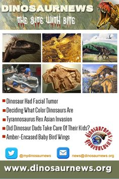 This Week - Dinosaur Had Facial Tumor * Deciding What Color Dinosaurs Are * Tyrannosaurus Rex Asian Invasion * Did Dinosaur Dads Take Care Of Their Kids? * Amber-Encased Baby Bird Wings http://www.dinosaurnews.org #dinosaurs #news #dinosaurnews #fossils