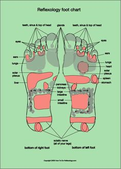 Foot Reflexology Chart – Complete Guide for Reflexology Foot Chart – Acupressure Points Guide Reflexology Foot Map, Reflexology Points, Acupressure Points, Reiki, Foot Chart, Diagram Chart, Muscle Anatomy, Foot Massage, Natural Health Remedies
