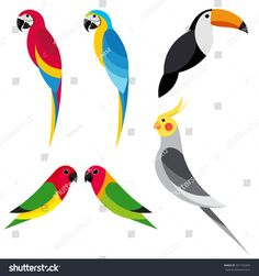 Find Set Flat Parrot On White Background stock images in HD and millions of other royalty-free stock photos, illustrations and vectors in the Shutterstock collection. Bird Drawings, Animal Drawings, Easy Drawings, Parrot Tattoo, Parrot Logo, Forest Drawing, Bird Template, Border Embroidery Designs, Motifs Animal