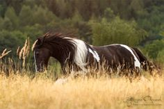 Believe In The Heart Of A Horse