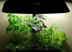 How To Grow Vegetables Indoors