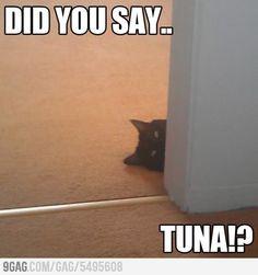 did you say...tuna?