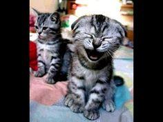 Funniest Sneezing Animals Compilation Ever (2015)