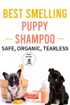 These puppy shampoo products are safe to use on your furry friend. Best Puppies, Pug Puppies, Pugs, Puppy Shampoo, Diy Shampoo, Adult Pug, Pug Accessories, Old Pug, Fawn Colour