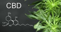 CBD oil is a potent liquid form of Cannabidiol that originates from the cannabis plant like marijuana or hemp. Its ability to relieve pain, stress and some Ayurveda, Arthritis, Nicotine Addiction, Endocannabinoid System, Chemical Formula, Cbd Hemp Oil, Cannabis Plant, Cannabis Oil, Ganja