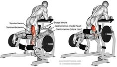 Kneeling leg curl. An isolation pull exercise. Main muscles worked: Hamstrings, Gastrocnemius, Gracilis, Sartorius, and Popliteus. See also lying leg curl and seated leg curl on website.
