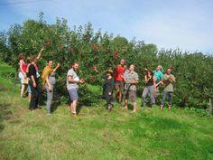 Organic orchard management
