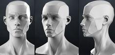 head anatomy - Google 検索