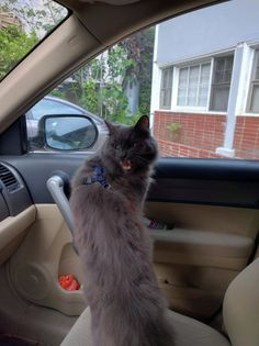 But dad I don't wanna go to the vet! - credit to: swipurr.com
