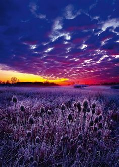 Sunrise, Phil Koch - You can almost smell the #lavender.  Create #bee heaven with this 1000 piece #jigsaw depicting a positively #purple #sunrise.  Available at www.coiledspring.co.uk